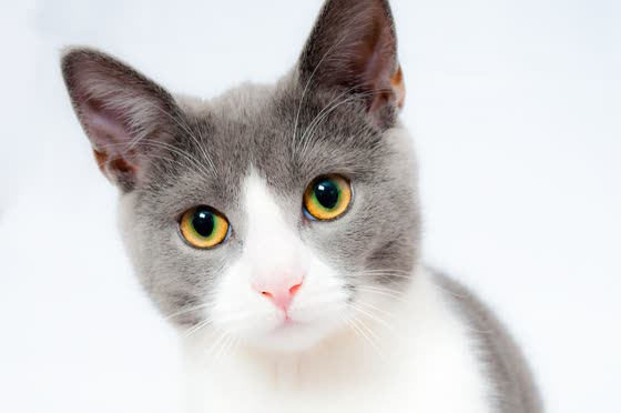 cat image for inference